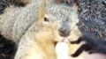 A squirrel takes a peanut from an outstretched hand